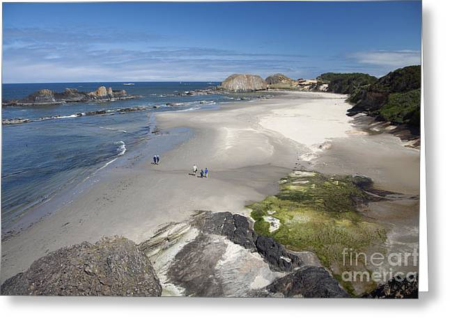 Jessie Honeyman Memorial State Park Greeting Card by Peter French