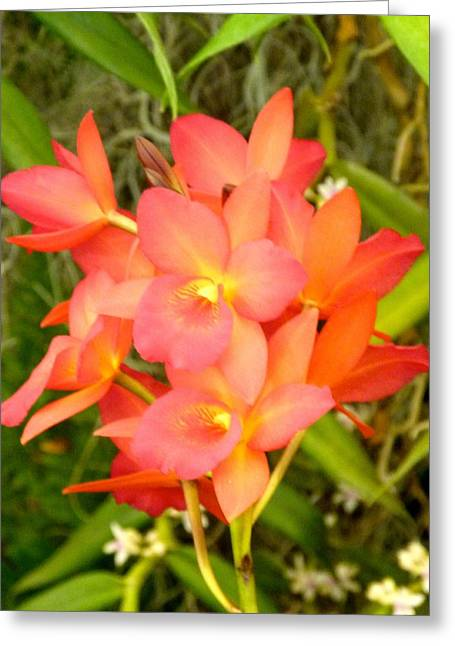 Jewel Box Orchids Greeting Card by Richard Bryce and Family
