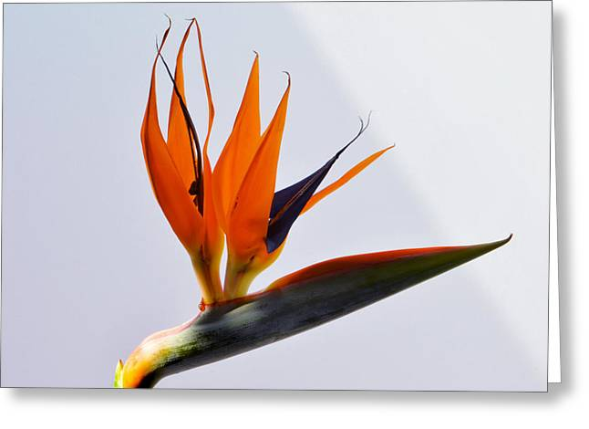 Jewel Of The Tropics. Greeting Card by Terence Davis