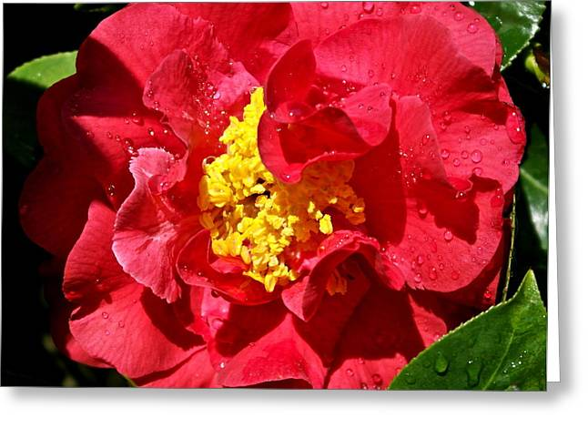 Jeweled Camellia Greeting Card