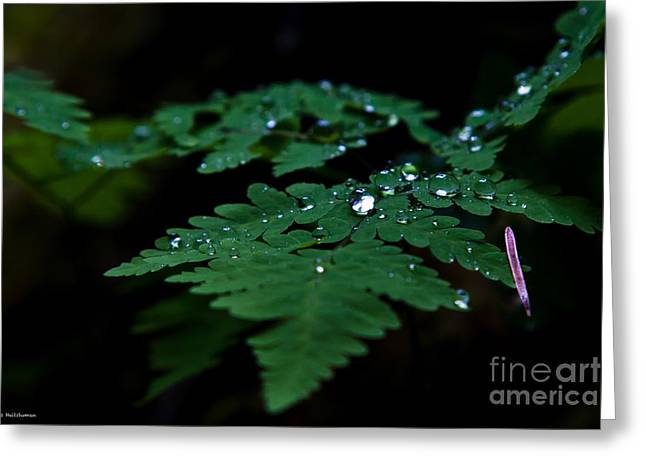 Jeweled Fern Greeting Card by Chris Heitstuman