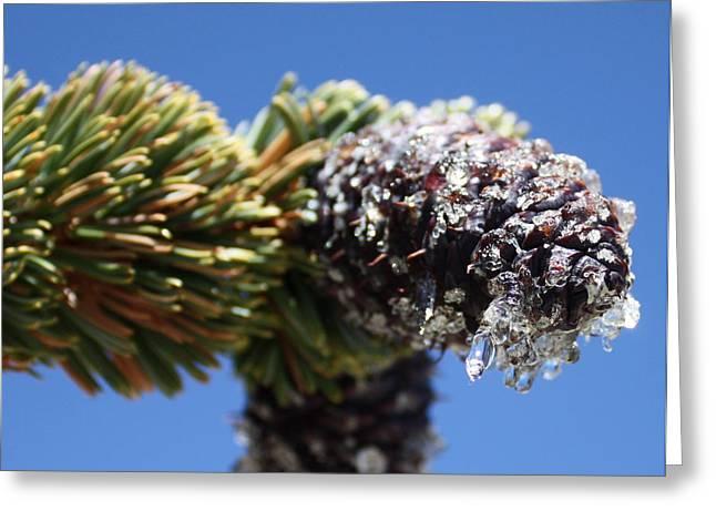 Jeweled Pinecone Greeting Card