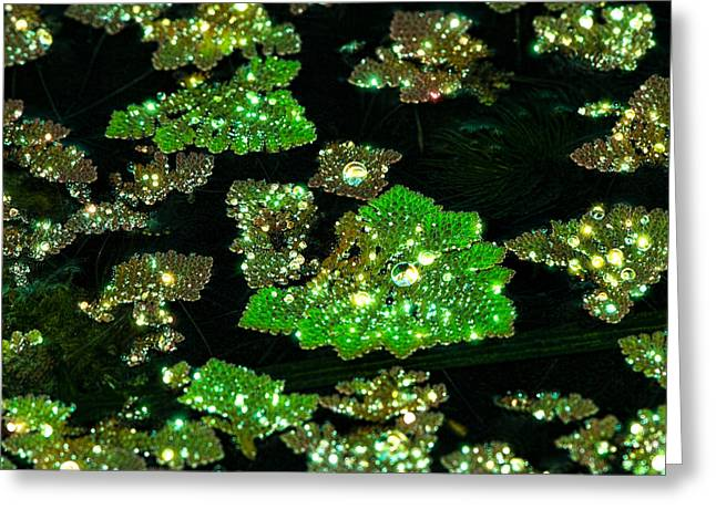 Jewels Of The Glades Greeting Card