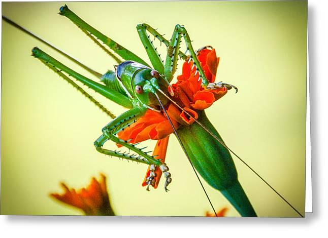 Jiminy Cricket Greeting Card by Wally Taylor