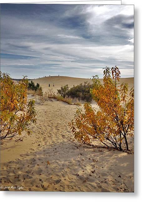 Jockey's Ridge Fall Colors 2 Greeting Card