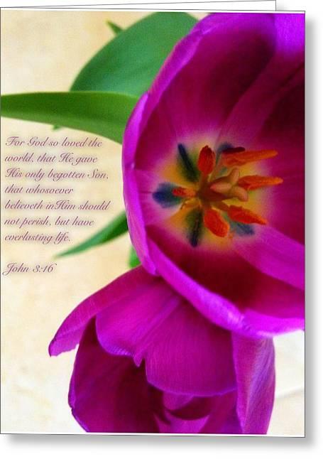 John 3 16 Greeting Card