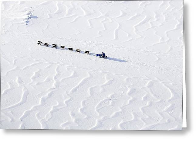 John Bakers Team Running Down Frozen Yukon River  Greeting Card by Jeff Schultz