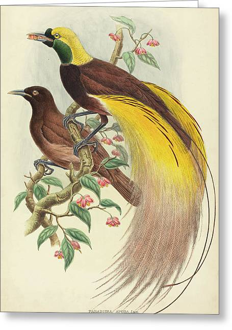John Gould And W Greeting Card