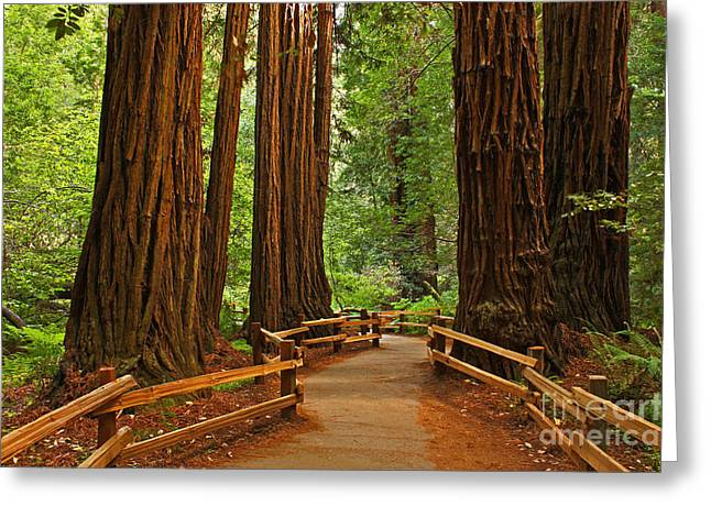 John Muir Redwoods Nineteen Greeting Card by Donald Sewell