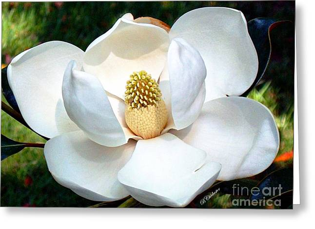 John's Magnolia Greeting Card by Barbara Chichester