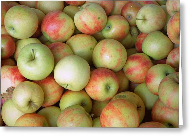 Jonagold Apples Greeting Card by Joseph Skompski