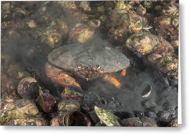 Jonah Crab Digging Greeting Card by Andrew J. Martinez