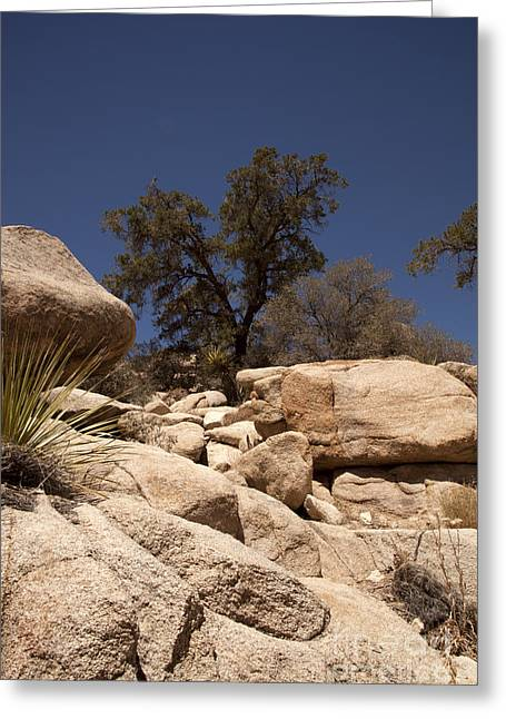 Joshua Tree Greeting Card by Amanda Barcon