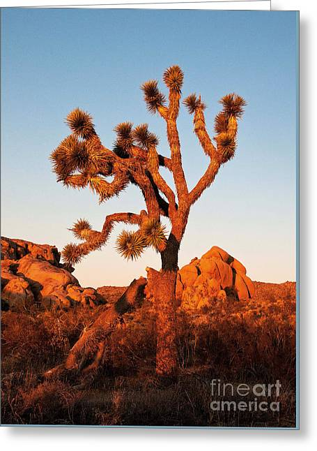 Greeting Card featuring the photograph Joshua Tree At Sunset by Mae Wertz