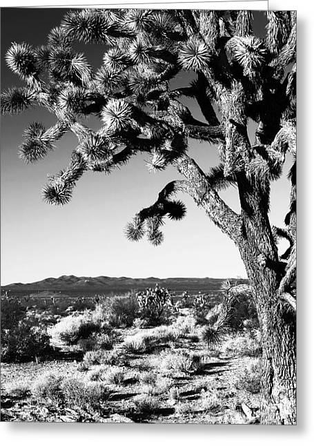Joshua Tree Bw Greeting Card by John Rizzuto