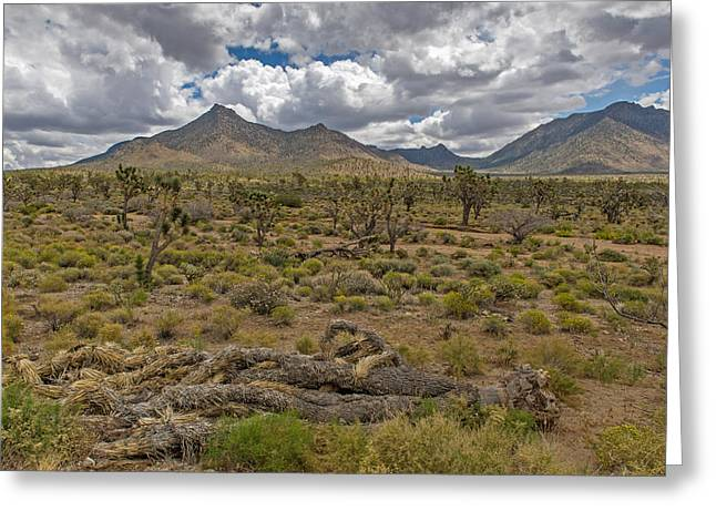 Joshua Tree Forest In Arizona Greeting Card by Willie Harper