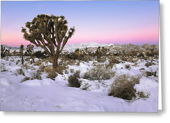 Joshua Tree In Snow Greeting Card