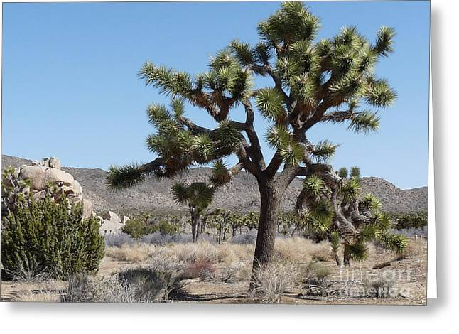 Joshua Tree National Park 6 Greeting Card by Deborah Smolinske
