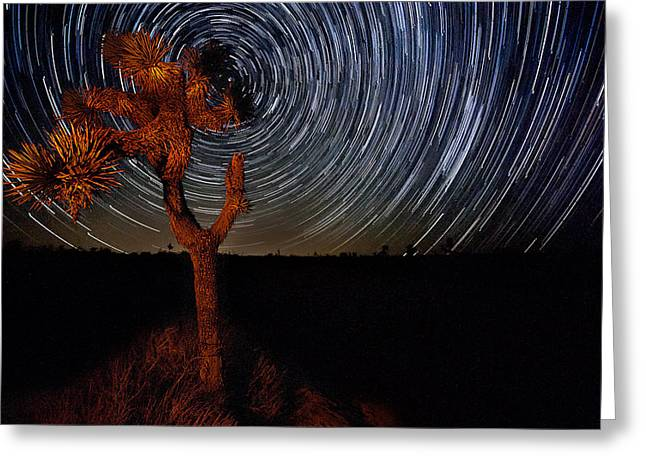 Joshua Tree Star Trails Greeting Card by Peter Tellone