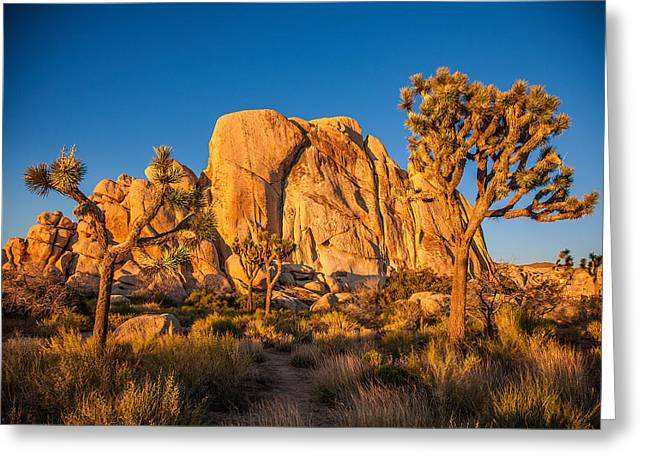 Joshua Tree Sunset Glow Greeting Card by Peter Tellone