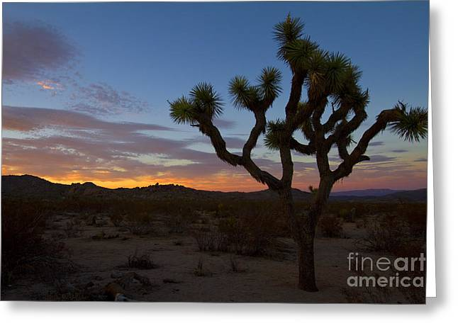Joshua Tree Sunset Greeting Card