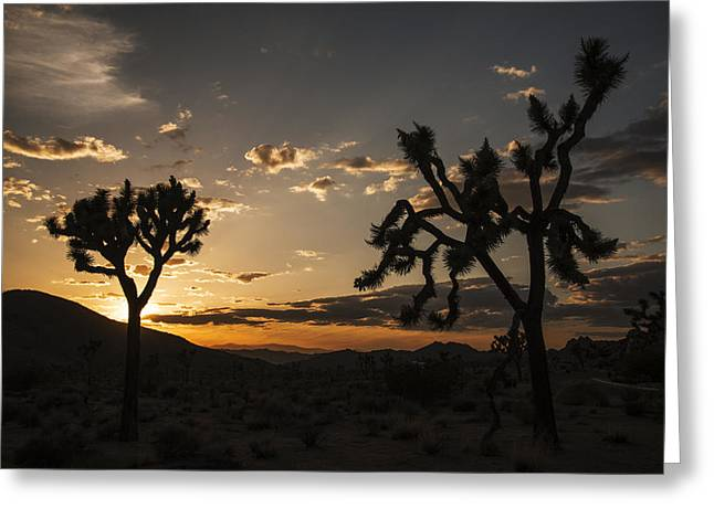 Joshua Tree Sunset Silhouette 2 Greeting Card