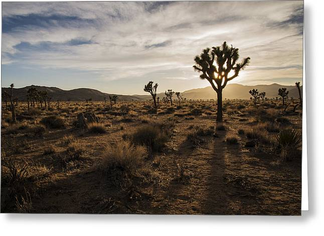 Joshua Tree Sunset Silhouette Greeting Card