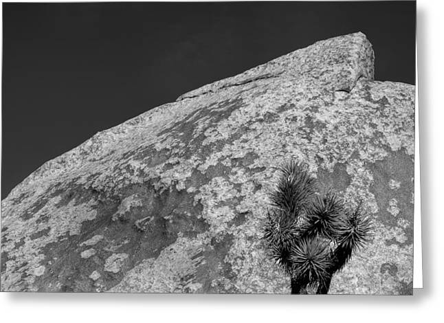 Joshua Tree Textures Greeting Card by Peter Tellone