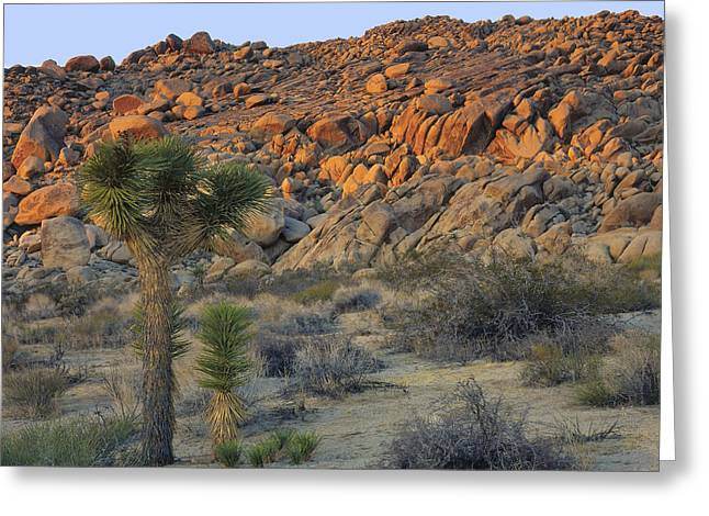 Joshua Tree With Offsrping Greeting Card