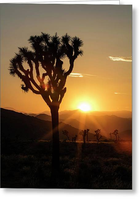 Joshua Tree (yucca Brevifolia) At Sunset Greeting Card