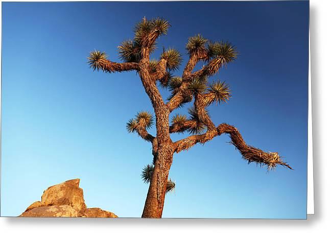 Joshua Tree (yucca Brevifolia) Greeting Card