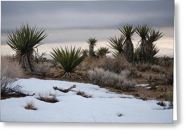 Joshua Trees And Snow Greeting Card by Pamela Schreckengost