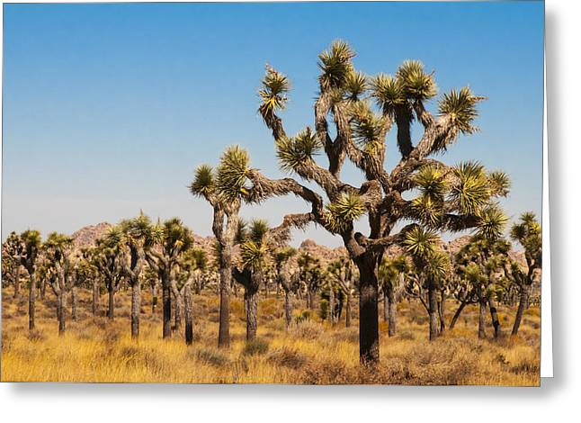 Greeting Card featuring the photograph Joshua Trees  by Penny Lisowski