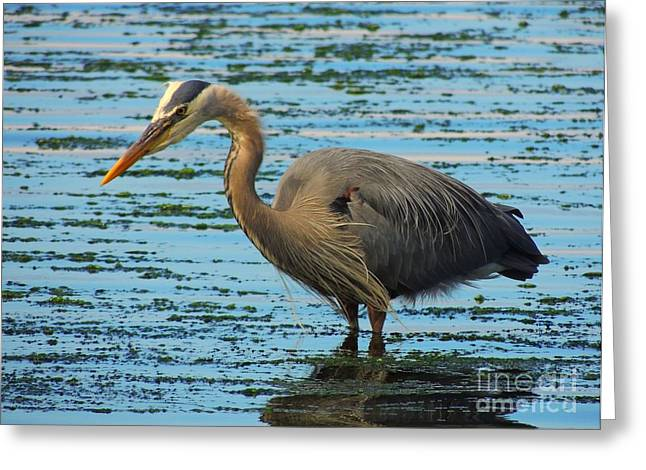Josy's Heron Greeting Card