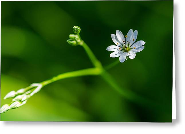 Joy Of Life - Featured 3 Greeting Card by Alexander Senin