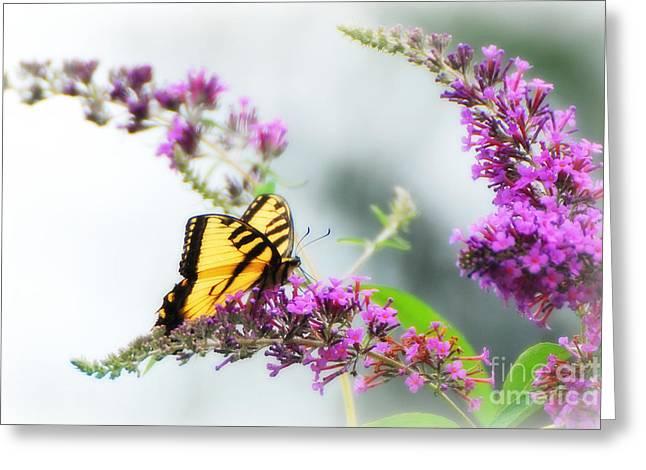 Joy Of Summer Greeting Card