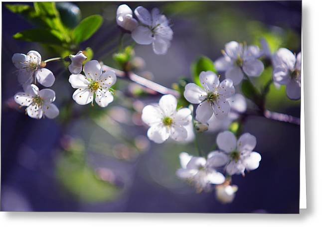 Joyful Cherry Blossom Greeting Card