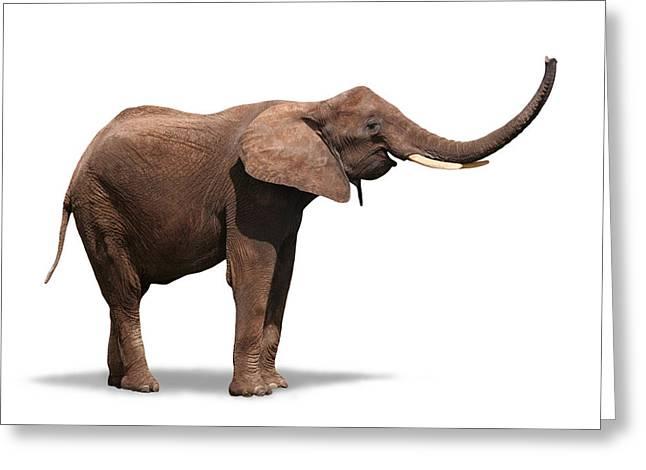 Joyful Elephant Isolated On White Greeting Card