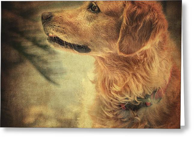 Golden Retriever Greeting Card