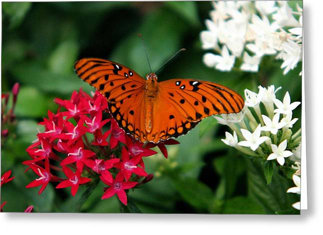 Julia Butterfly Greeting Card