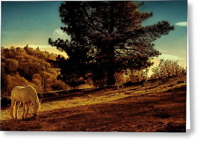 Springtime California Landscape Greeting Card