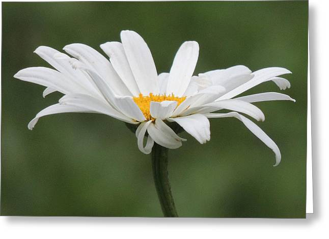 Juli's Daisy Greeting Card