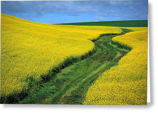 July Canola Greeting Card by Latah Trail Foundation