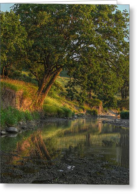 July Morning Along The Creek Greeting Card