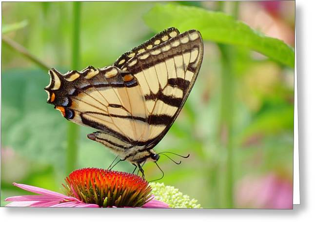 July Swallowtail Greeting Card