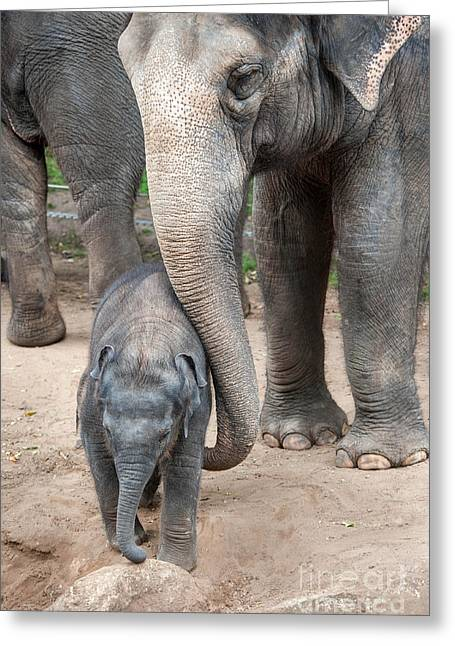 Jumbo Love Greeting Card