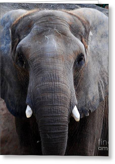 Greeting Card featuring the photograph Jumbo by Nancy Bradley