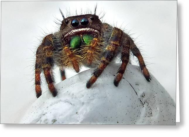 Jumper Spider 2 Greeting Card