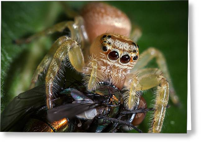 Jumping Spider 3 Greeting Card by Brad Grove
