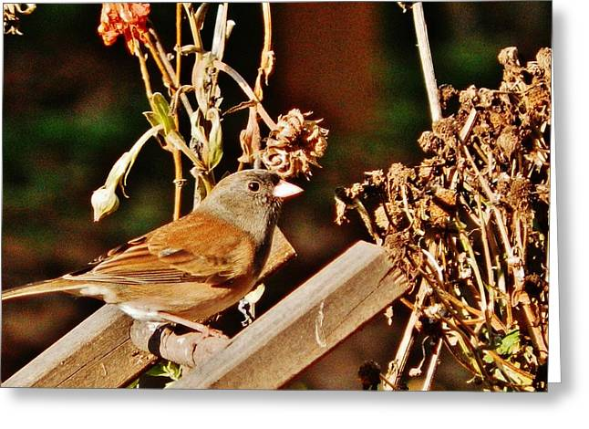 Greeting Card featuring the photograph Junco Jaunt 2 by VLee Watson